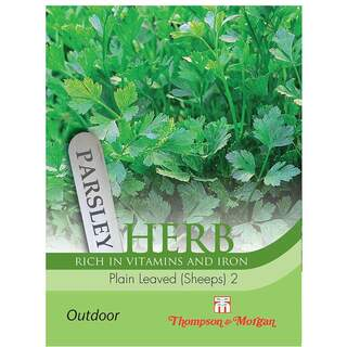 Herb Parsley French Plain Lea