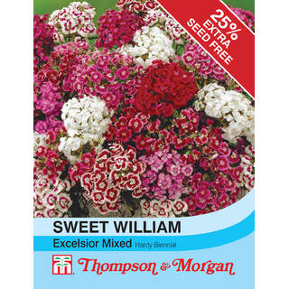 Sweet William  Excelsior Mix