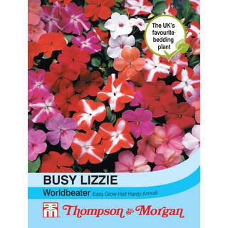 Busy Lizzie Worldbeater
