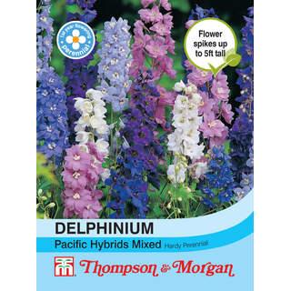 Delphinium Pacific Hybrids Mix