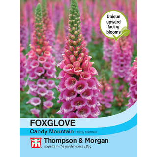 Foxglove Candy Mountain