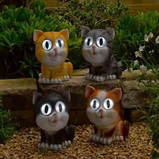 Bright Eye Cats