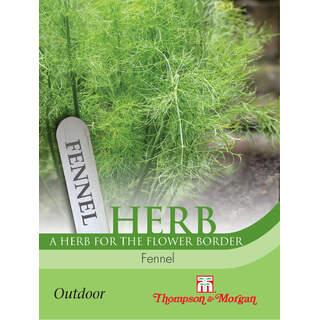 Herb Fennel