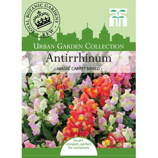 Antirrhinum Magic Carpet