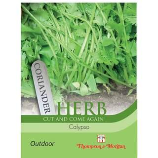 Herb Coriander Calypso