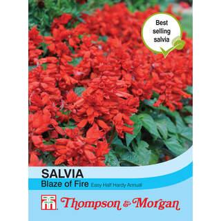 Salvia Blaze of Fire