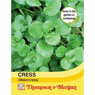 Cress (Watercress)