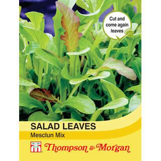 Salad Leaves - Meslun Mix