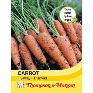 Carrot Fly Away F1 Hybrid