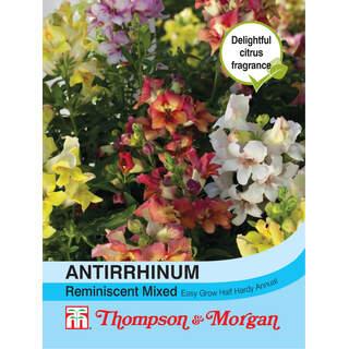 Antirrhinum Reminiscent Mixed F1 Hybrid