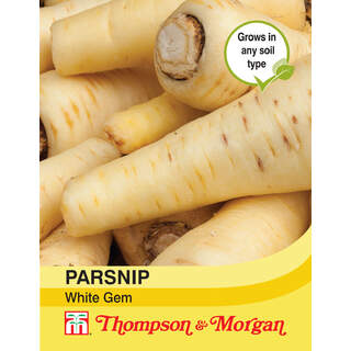 Parsnip White Gem