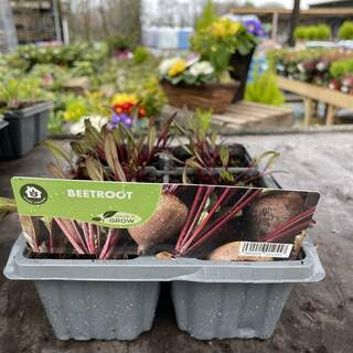 Beetroot Boltardy 6 pack