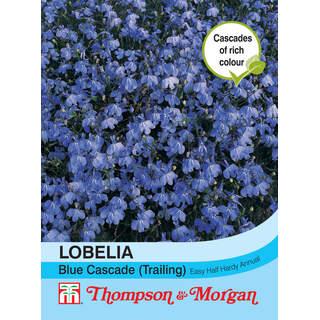 Lobelia (Trailing) Blue Casca