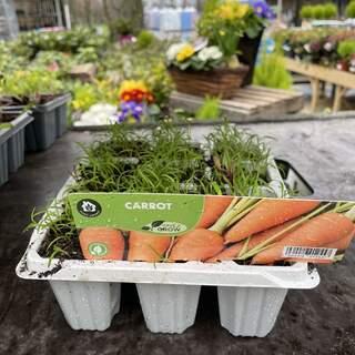 Carrot 12 pack