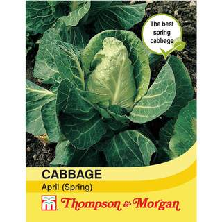 Cabbage (Spring) April