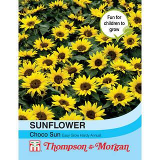 Sunflower annuus Choco Sun
