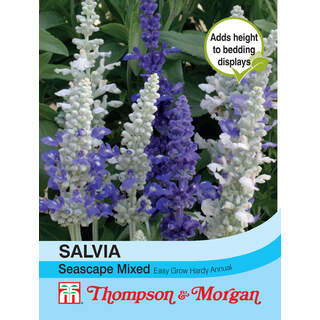 Salvia Seascape Mixed