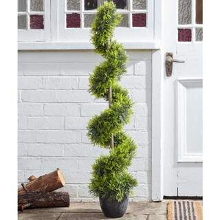Cypress Topiary Twirl 120 cm