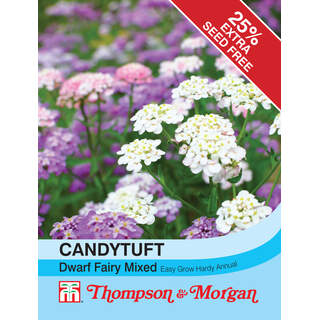Candytuft Dwarf Fairy Mixed