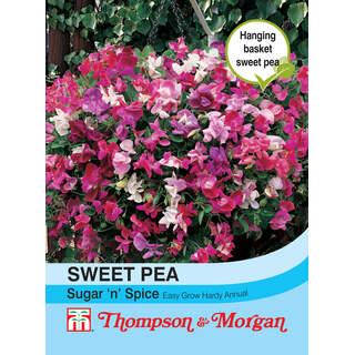 Sweet Pea Sugar N Spice
