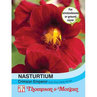 Nasturtium majus Crimson Emperor