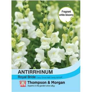 Antirrhinum Royal Bride