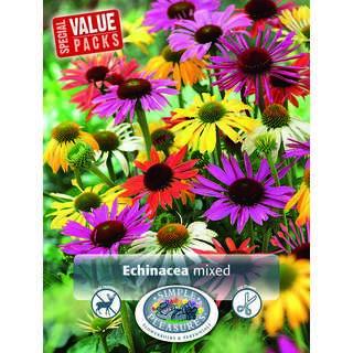 Echinacea Mix 4