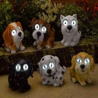 Bright Eye Dogs