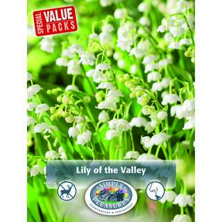 Convellaria Lily of the Valley 10