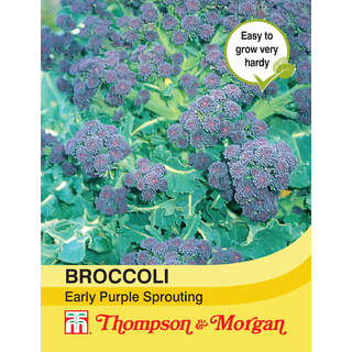 Broccoli Early Purple Sprouti