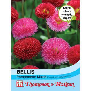 Bellis Pomponette Mixed
