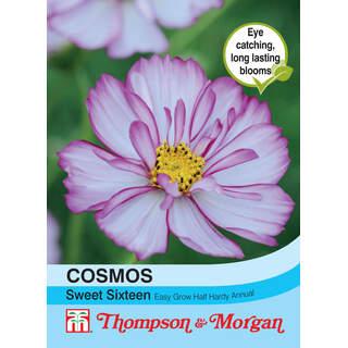 Cosmos Sweet Sixteen