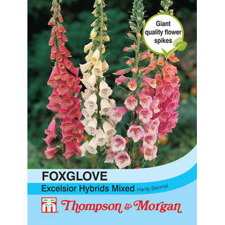 Foxglove Excelsior Hybrids M
