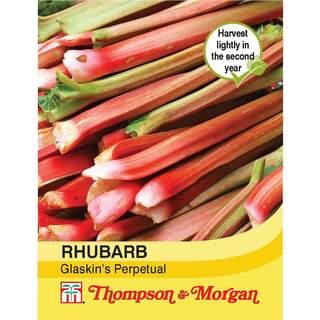 Rhubarb Glaskins Perpetual