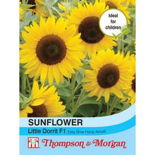 Sunflower Little Dorrit F1 Hybrid