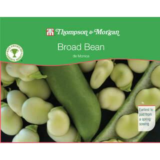 Broad Bean de Monica