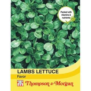 Lambs Lettuce Favor