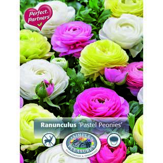 Ranunculus Pastel Peonies