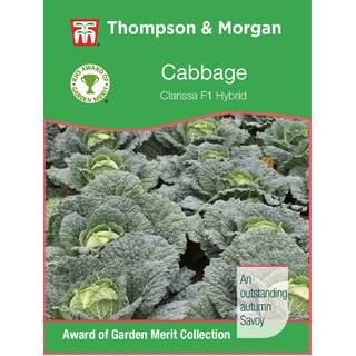Cabbage Savoy Clarissa