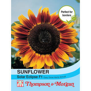 Sunflower annuus Solar Eclip