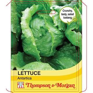 Lettuce Antarctica