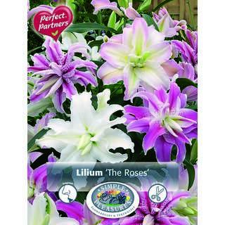 Lilium The Roses 4