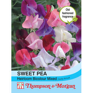 Sweet Pea Heirloom Bicolour M