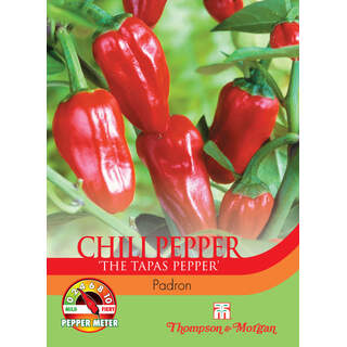 Pepper Chilli Padron