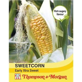 Sweet Corn Early Xtra Sweet F