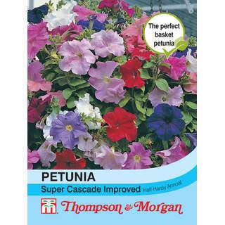 Petunia x hybrida Super Casc