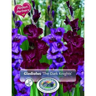 Gladioli The Dark Knights