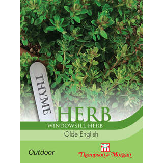 Herb Thyme Olde English