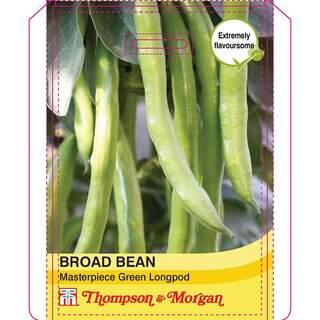 Broad Bean Masterpiece Green