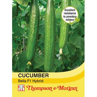 Cucumber Bella